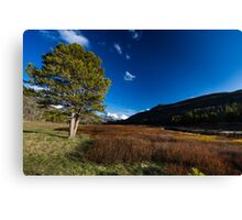 Spring breaks in the Uinta's Canvas Print