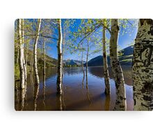 Aspens in Smith and Morehouse  Canvas Print