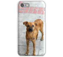 Stray Dog on the Street iPhone Case/Skin