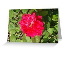 The Rose Garden Continued Greeting Card