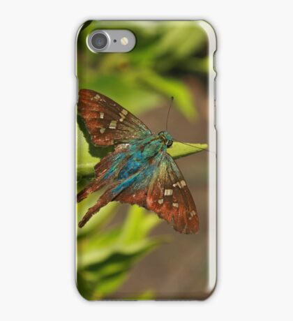 Blue and Brown Moth iPhone Case/Skin