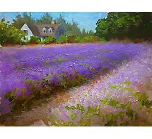 Lavender Field and Farm House Landscape Oil Painting Photographic Print