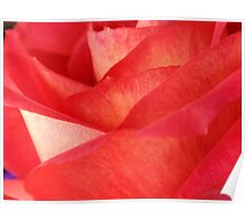 Rose Pedals Poster