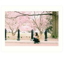 Washington Cherry Blossoms Art Print
