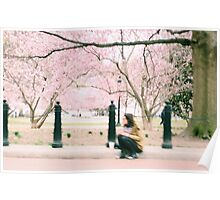 Washington Cherry Blossoms Poster
