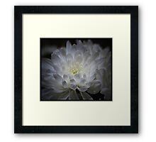 White & Wonderful Framed Print