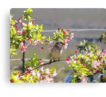 Cherry blossom bird Canvas Print
