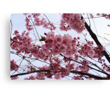 Cherry Blossoms by Sorknes Canvas Print