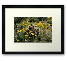 Springtime Splendor on the Desert Floor Framed Print