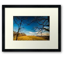 Vineyard in late winter Framed Print