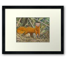 Malay Weasel Pastel Painting Framed Print