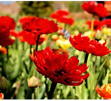 Red Flower Patch Photographic Print