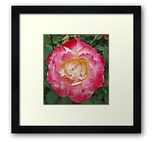 Magenta Flower Framed Print