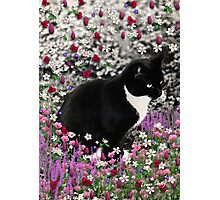 Freckles in Flowers II - Tuxedo Cat Photographic Print