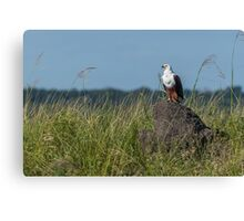 African fish eagle perched on termite mound Canvas Print