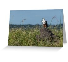 African fish eagle perched on termite mound Greeting Card