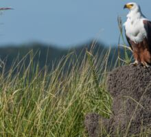 African fish eagle perched on termite mound Sticker