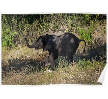 Baby elephant appearing to dance down slope Poster