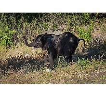 Baby elephant appearing to dance down slope Photographic Print
