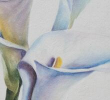THREE GORGEOUS AND DELICATE CALLA LILIES Sticker