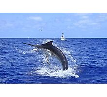 Marlin Canvas or Print - Giant Black Marlin Head Shake Photographic Print