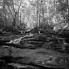 Stephenson Creek by Bill Wetmore