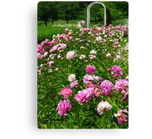 A Patch of Peonies  Canvas Print