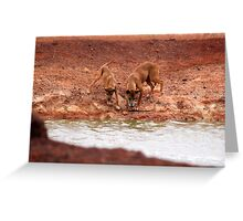 Dingo and pup at the water hole Greeting Card
