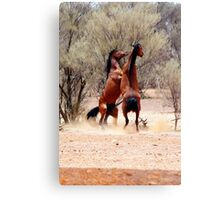 stallion fight Canvas Print