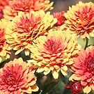 Mums the Word by Bob Hardy