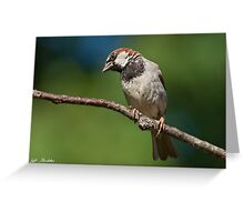 Male House Sparrow Perched in a Tree Greeting Card