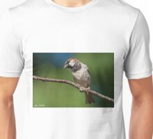 Male House Sparrow Perched in a Tree Unisex T-Shirt