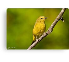 Female Yellow Warbler Canvas Print