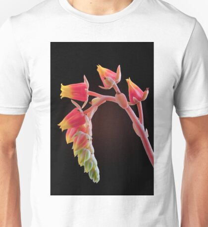 Echeveria flowers Unisex T-Shirt