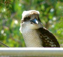 backyard kookaburra  Sticker