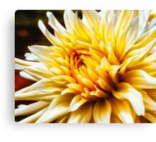 Dahlia In Bloom 21 Canvas Print