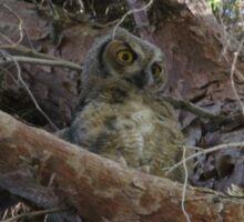 Great Horned Owlet  Sticker