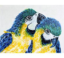 Two Macaw Parrots Photographic Print