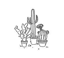 Hand Drawn Cacti Photographic Print