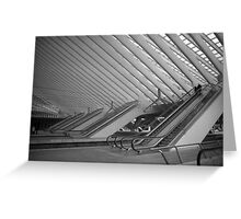 Guillemins Greeting Card