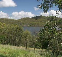 Trees at Lake Monduran 4 by STHogan