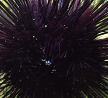 Sea Urchin Sticker
