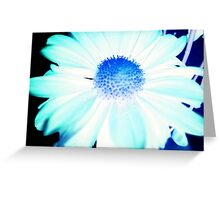 Aster Inversion Greeting Card