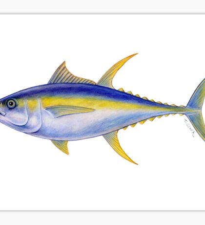 Yellowfin Tuna (Thunnus albacares) Sticker