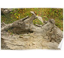 Tree Stump With Grass Poster