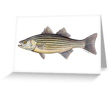 Striped Bass (Morone saxatilis) Greeting Card