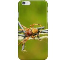 Orb Weaver Spider on a Barb iPhone Case/Skin