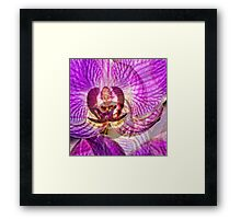 Ethereal Orchid By Sharon Cummings Framed Print