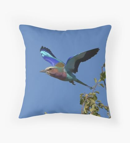 Lilac Breasted Roller in flight, Botswana Throw Pillow