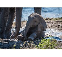 Baby elephant sitting in mud beside mother Photographic Print